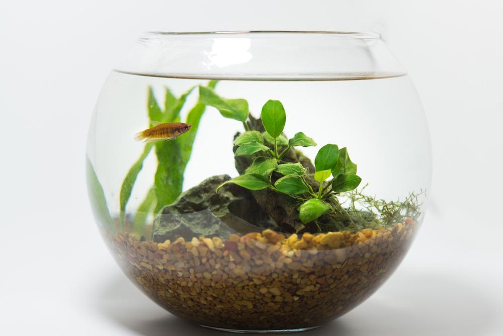 ワンルームに小さな水族館を作ろう!一から始めるボトルアクアリウムの作り方