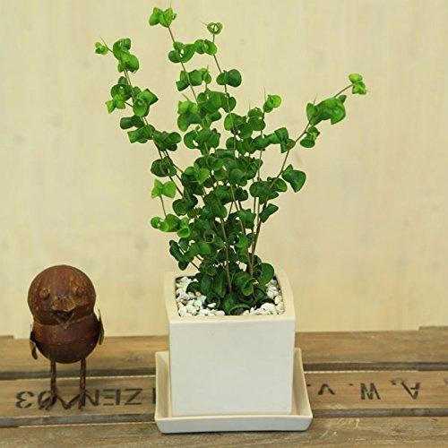 58d34c20528bc3430267fc2cd5c18cd3 ワンルームでも育てやすいミニ観葉植物8種を特集!小さい植物を育てよう