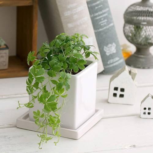 5f5570089034c1f360c7c7959142669a ワンルームでも育てやすいミニ観葉植物8種を特集!小さい植物を育てよう