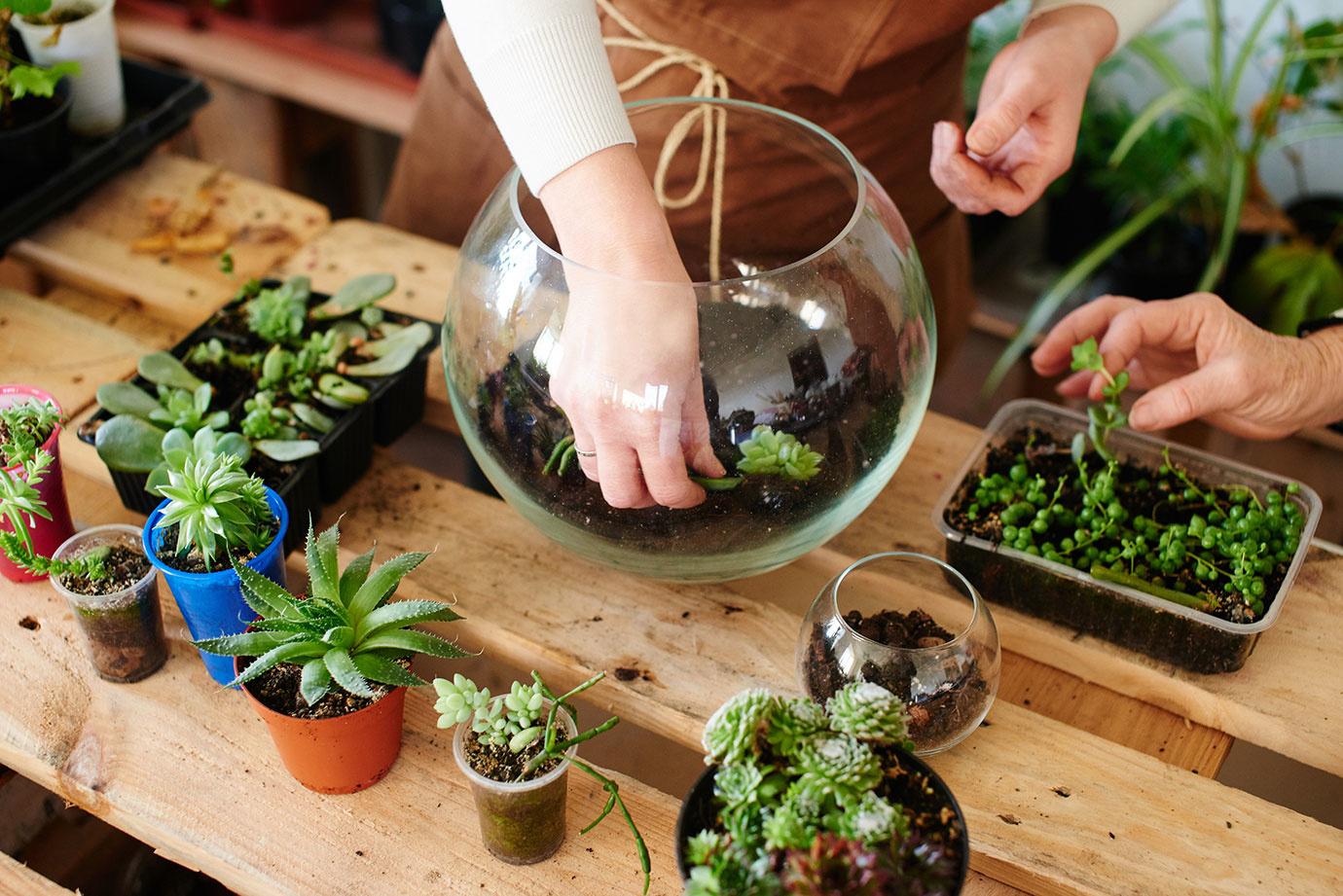 ワンルームでも育てやすいミニ観葉植物8種を特集!小さい植物を育てよう