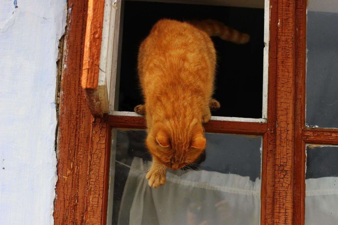 愛猫を絶対に脱走させない! 簡単に設置できる窓周りのアイテム4選