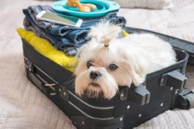 賃貸でもできる! 愛犬のための防災対策と避難に必要なモノ