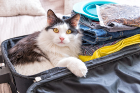 愛猫を災害から守る! 避難のための3つの備えと用意すべきモノ8点